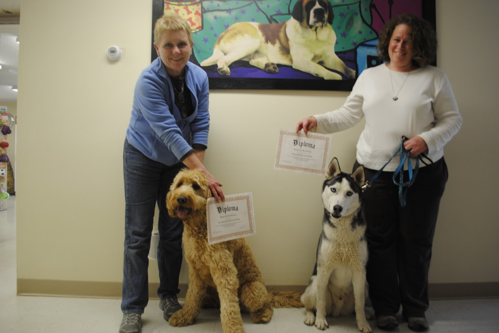 Dog training in Conway NH