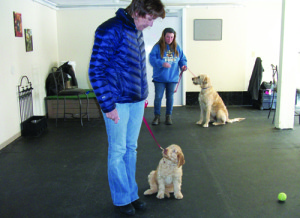 Professional dog training