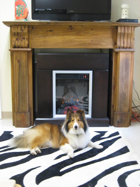 We specialize in dog boarding in nh and mainedog boarding for Pet hotels near me