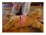 Primary assessment for dog cpr