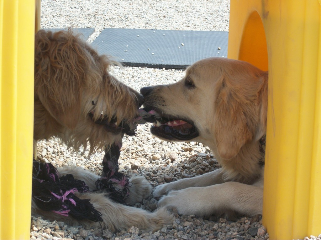 Best daycare facility for dogs