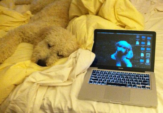 Doodle Breeders review Karlas Pets