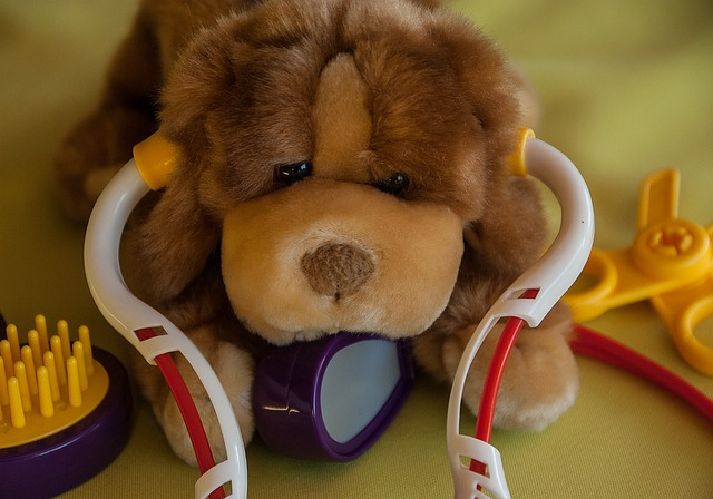 Safe dog daycare