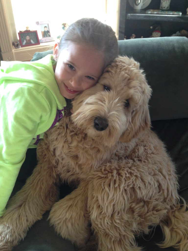 Karlas Pets Goldendoodle Customer Review Baily 3
