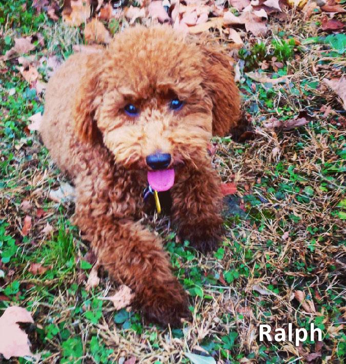 Ralph the dad