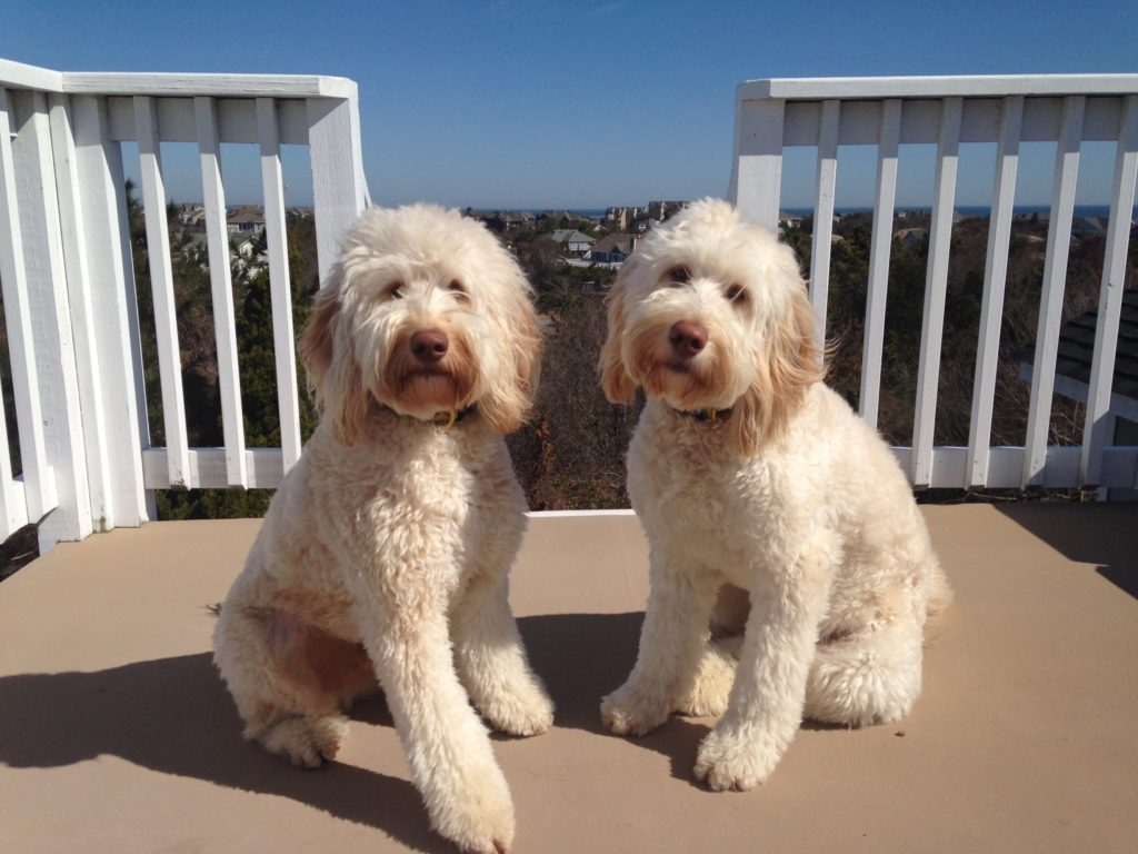 We love to share our Doodle breeder reviews from our customers.